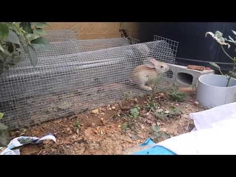 rabbit hutch & rabbit run