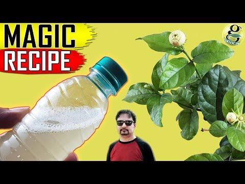 USE THIS MAGIC FORMULA For Organic Pest Control | Best Natural Pesticide Recipe