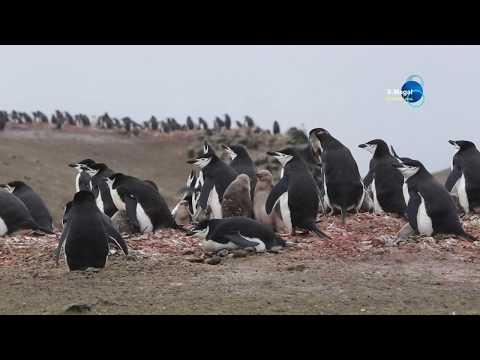Antarctica, South Shetland Islands Barrientos Island