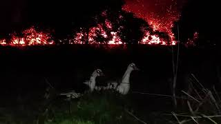 Duck duck lava. The big island of Hawaii May 13th 9 p.m. Leilani lava volcanic eruption