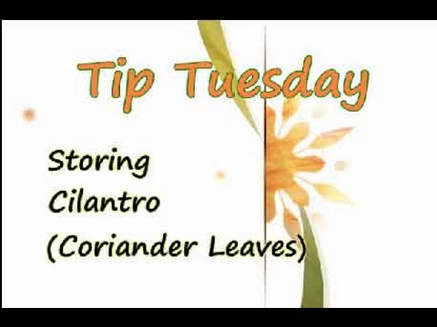 How to store Cilantro (Coriander) - Household Tips Video