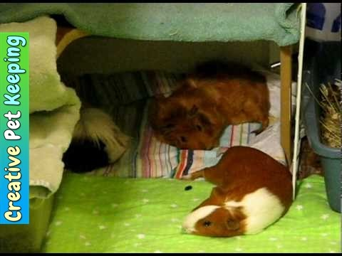 Guinea Pig Closet Cage | Creative Cage Idea