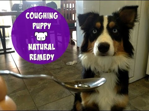 Coughing Dog - Natural Remedy