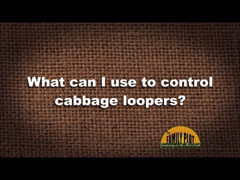 Q&A – What can I use to control cabbage loopers?