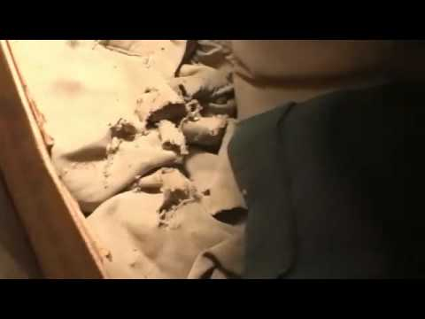 Dealing With Attic Rats or Roof Rats Part 2