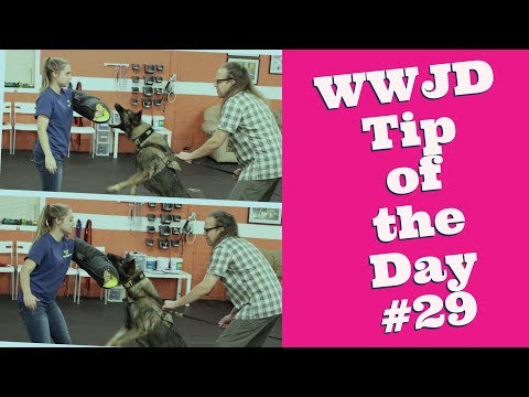What Would Jeff Do? Dog Training Tip of the Day #29 Stop training an attack dog