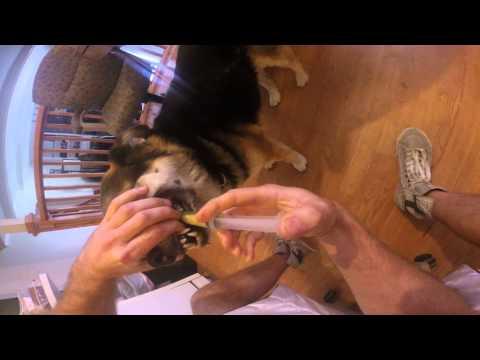 Juicing Treatment for a Sick Dog that Won't Eat - Shiela