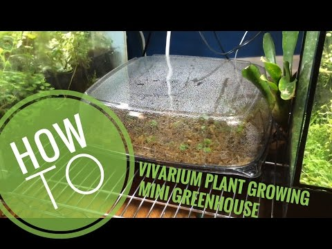 How to make a cheap easy plant propagator for vivarium plants + 1 month update