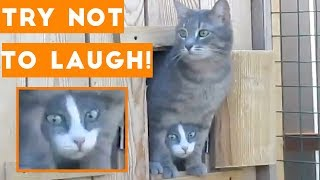 Try Not To Laugh Funniest Animal Compilation 2018   Funny Pet Videos
