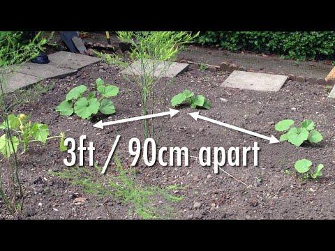 How to Grow Plump Pumpkins