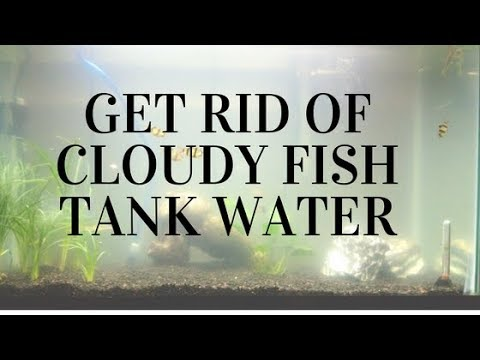How to get rid of cloudy fish tank water