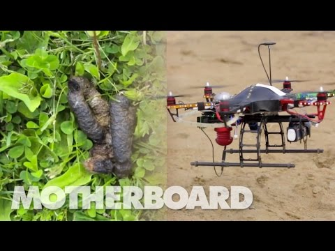 Dive-Bombing Drone Confronts Goose Poop Head On