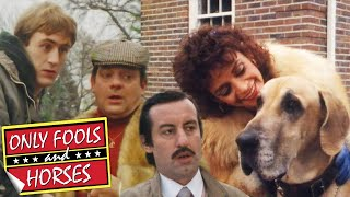 Boycie's Dangerous Dog Doesn't Like Rodney | Only Fools and Horses | BBC Comedy Greats