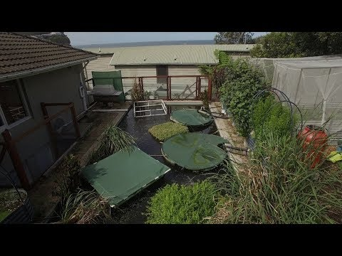 How to Turn a City Swimming Pool into an Organic Fish Farm - Pool to Pond to Plate