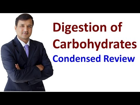 Carbohydrates Digestion