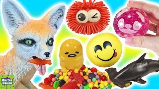 Download Cutting Open Squishy Fox Toy! What's Inside Squishy Toys And Stress Balls! Doctor Squish Video