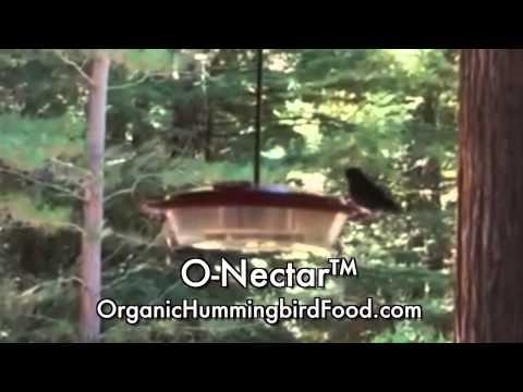 Organic Hummingbird Food