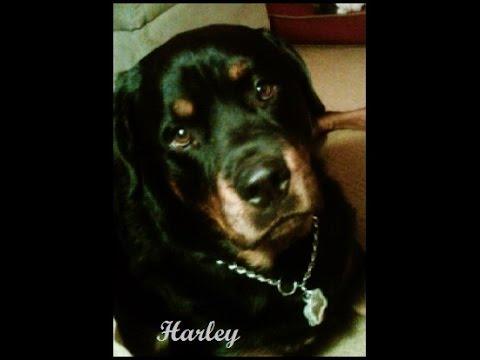 Harley R.I.P.  January 8, 2006 ~ November 18, 2014