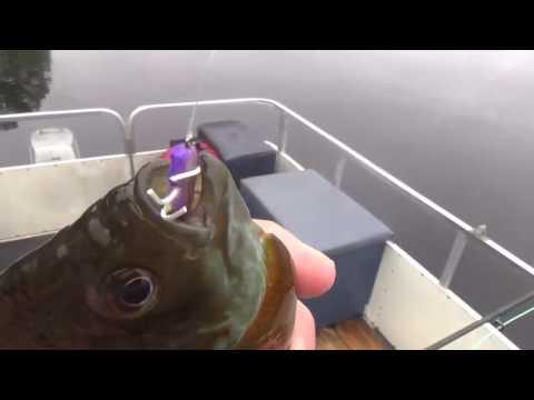 Making Your Own Sunfish & Bluegill Bait - Best bait for 2016