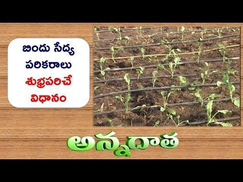 Profitable Watermelon Cultivation | by Srikakulam Farmer || ETV Annadata