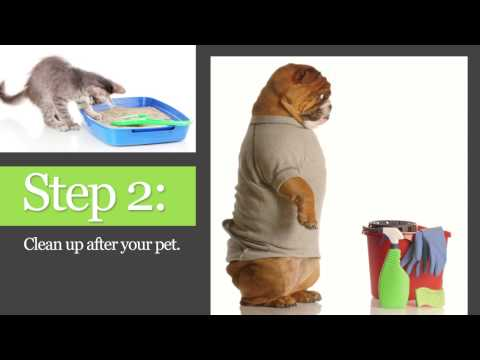 Steps for Keeping Parasites Away from Your Pet - 2PetLovers