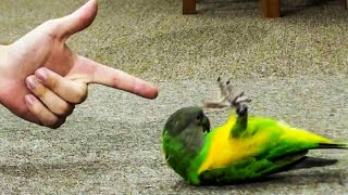 Funny Parrots Videos Compilation Cute Moment Of The Animals 🤣 Cute Parrots Doing Funny Thing