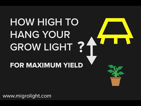 How Far Should Grow Lights Be From Plants? Learn How high To Hang A Grow Light