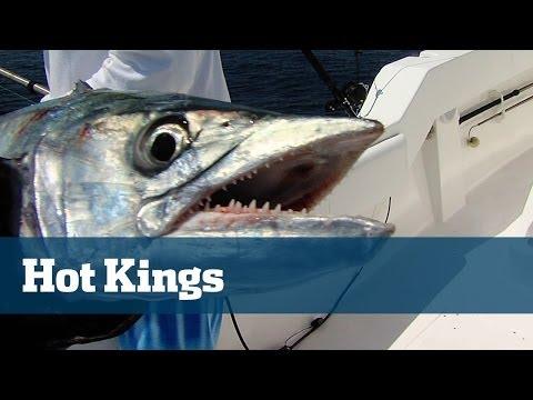 Hot King Mackerel Fishing Off South Florida On Kites And Flatlines - Florida Sport Fishing TV