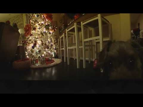 Dogs and Xmas trees