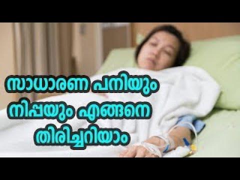 സാധാരണ പനിയും നിപ്പയും എങ്ങനെ തിരിച്ചറിയാം | Nipah Virus
