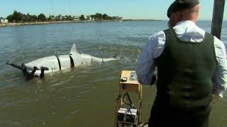 Shark-Attack Defenses | MythBusters Jawsome Shark Special -- Shark Week 2012