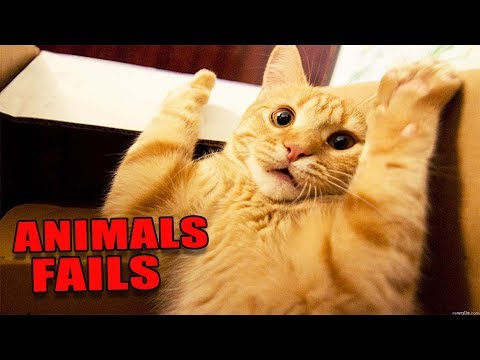 *EPIC FAILS* Extremely Funny Animals! Stomach Pain WARNING! (Funny Animals/Pets Videos) 2017