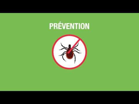 La maladie de Lyme : Ce que vous devez savoir.