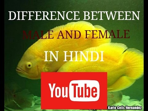 Oscar fish difference between Male and female in hindi