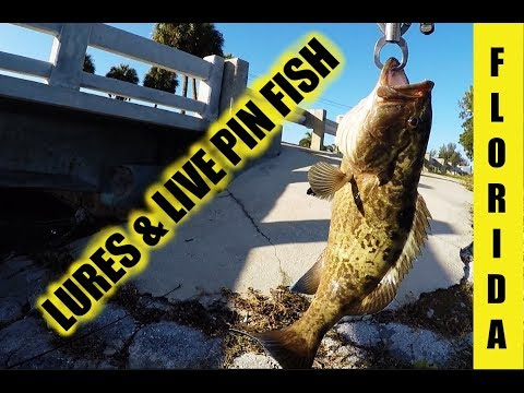 Lost Big Fish Caught Snook Grouper on Lures Live Pinfish