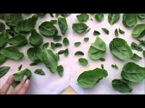 Drying Basil the Easy Way