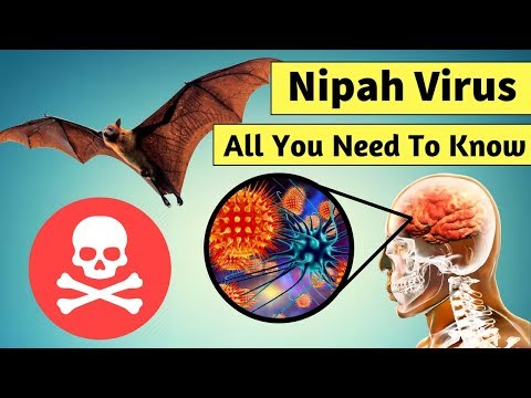 All About Deadly Nipah Virus - Signs, Symptoms & Prevention