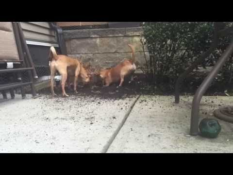 My Dogs Are Digging Up My Yard!!