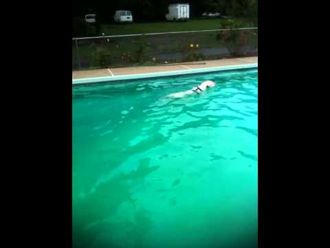 All dogs can swim!