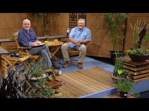 Pond & Bog Plants with Pizazz |Steve Kainer |Central Texas Gardener