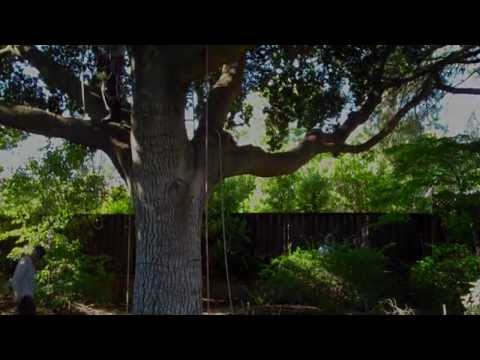 (109) What is the right way to prune a tree?