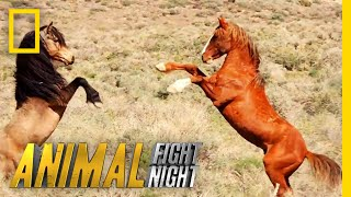 Download That's Some Dangerous Horseplay | Animal Fight Night Video