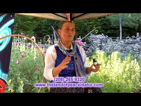 Lavender organic healing oil