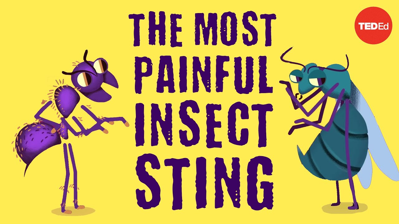 The world's most painful insect sting - Justin Schmidt