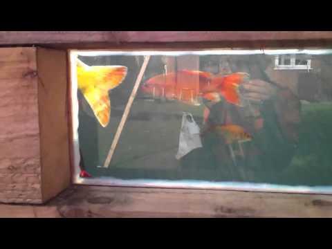 Raised koi pond sleeper type with window