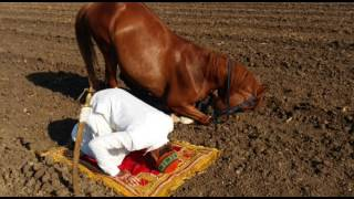 Horse is praying namaz
