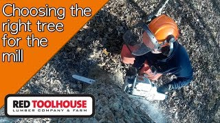 Selecting The Right Trees For Our Saw Milling Projects