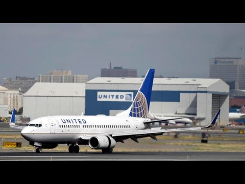 United Airlines accidentally sends dog to Japan, days after puppy died on plane