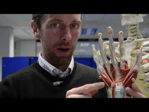 Hand & wrist bones & muscles of the hand