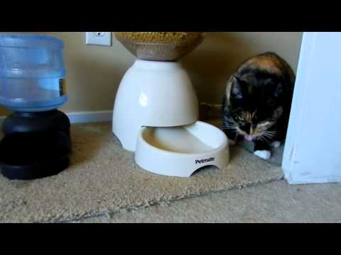 Why my cat can't lose weight!!!!!!!!!!